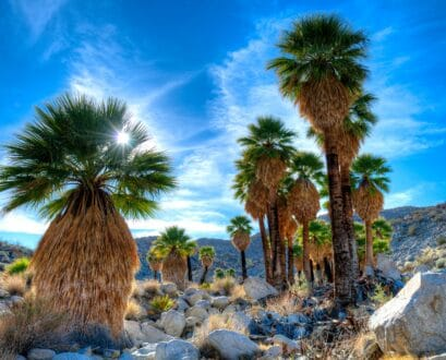 Top 13 Reasons to Visit Anza-Borrego Desert State Park