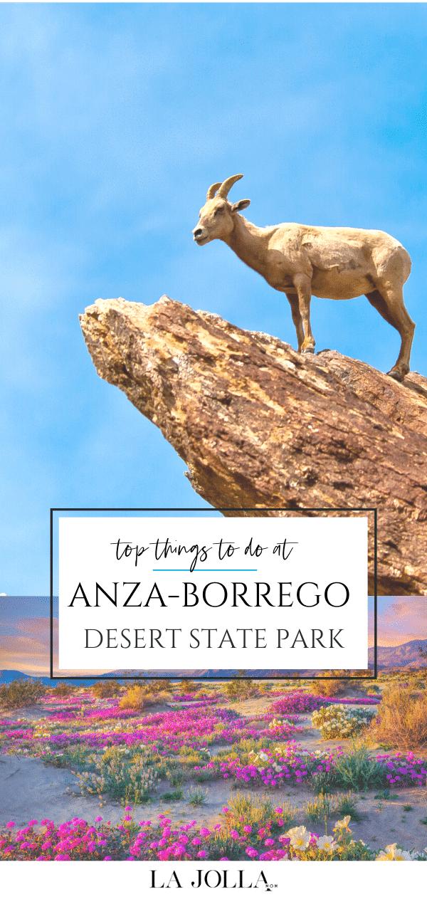 Le parc d'État du désert d'Anza-Borrego est le plus grand parc d'État de Californie et offre des possibilités de randonnée, de campement, d'observation des étoiles, de repérage de fleurs sauvages et plus encore toute l'année.