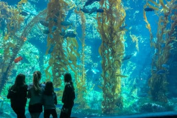 Birch Aquarium in La Jolla is one of San Diego's best attractions