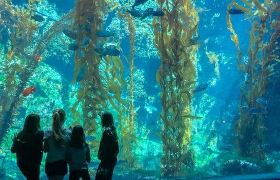 Guide to Birch Aquarium