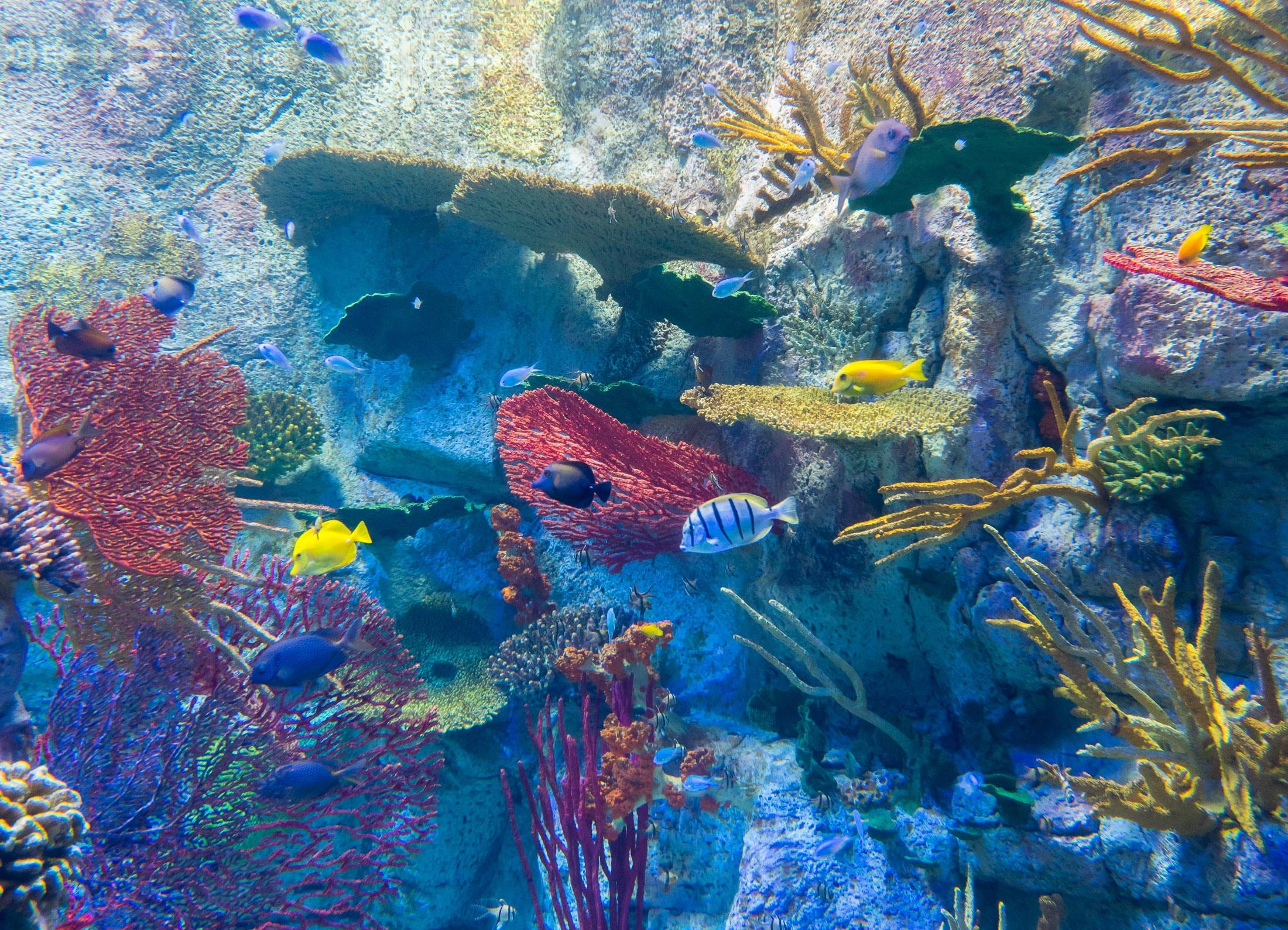 Birch Aquarium San Diego Insider's Guide: Top Exhibits ...