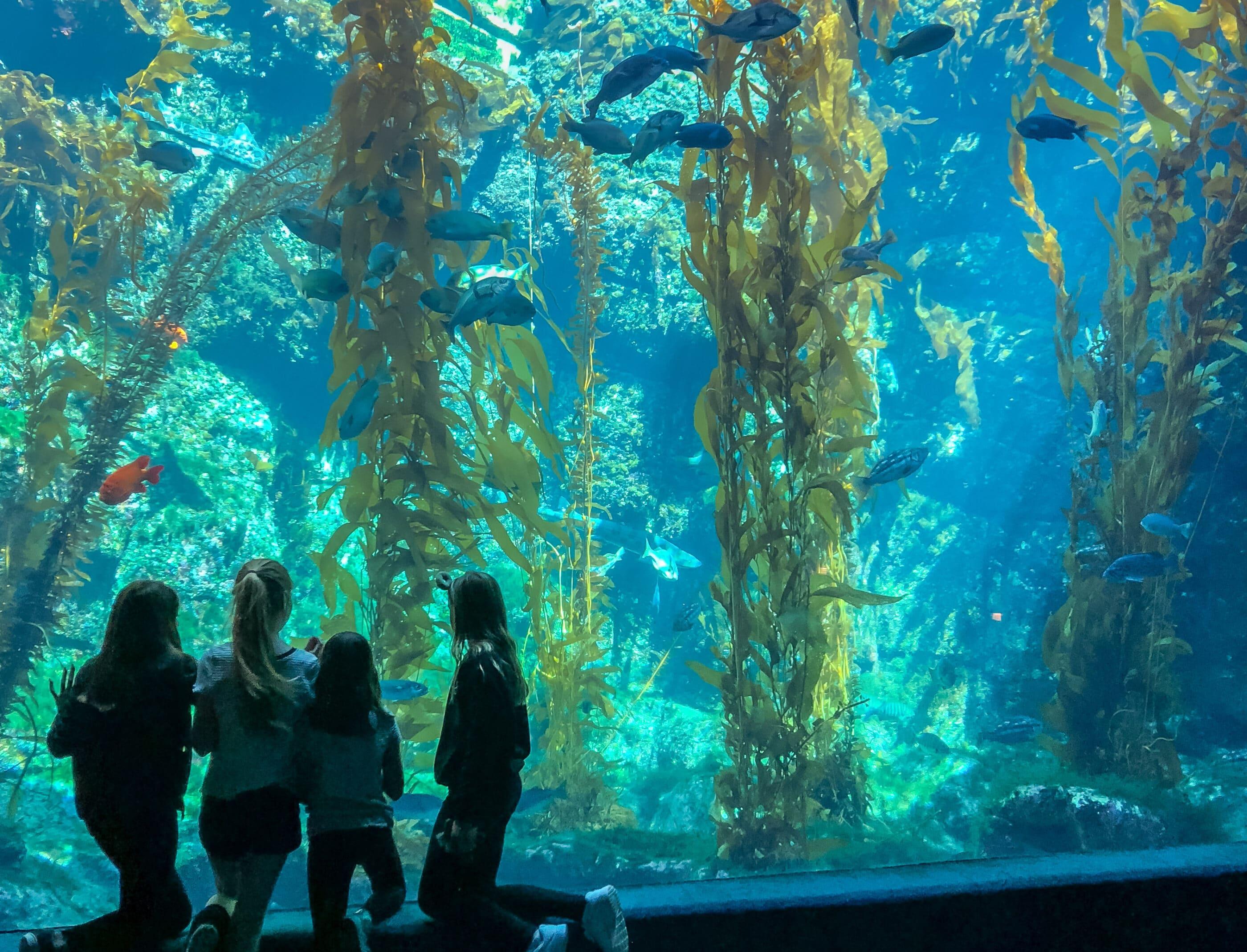 Birch Aquarium in La Jolla is one of San Diego's best attractions
