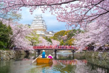 See spring flowers in Kyoto where cherry blossoms bloom in abundance.