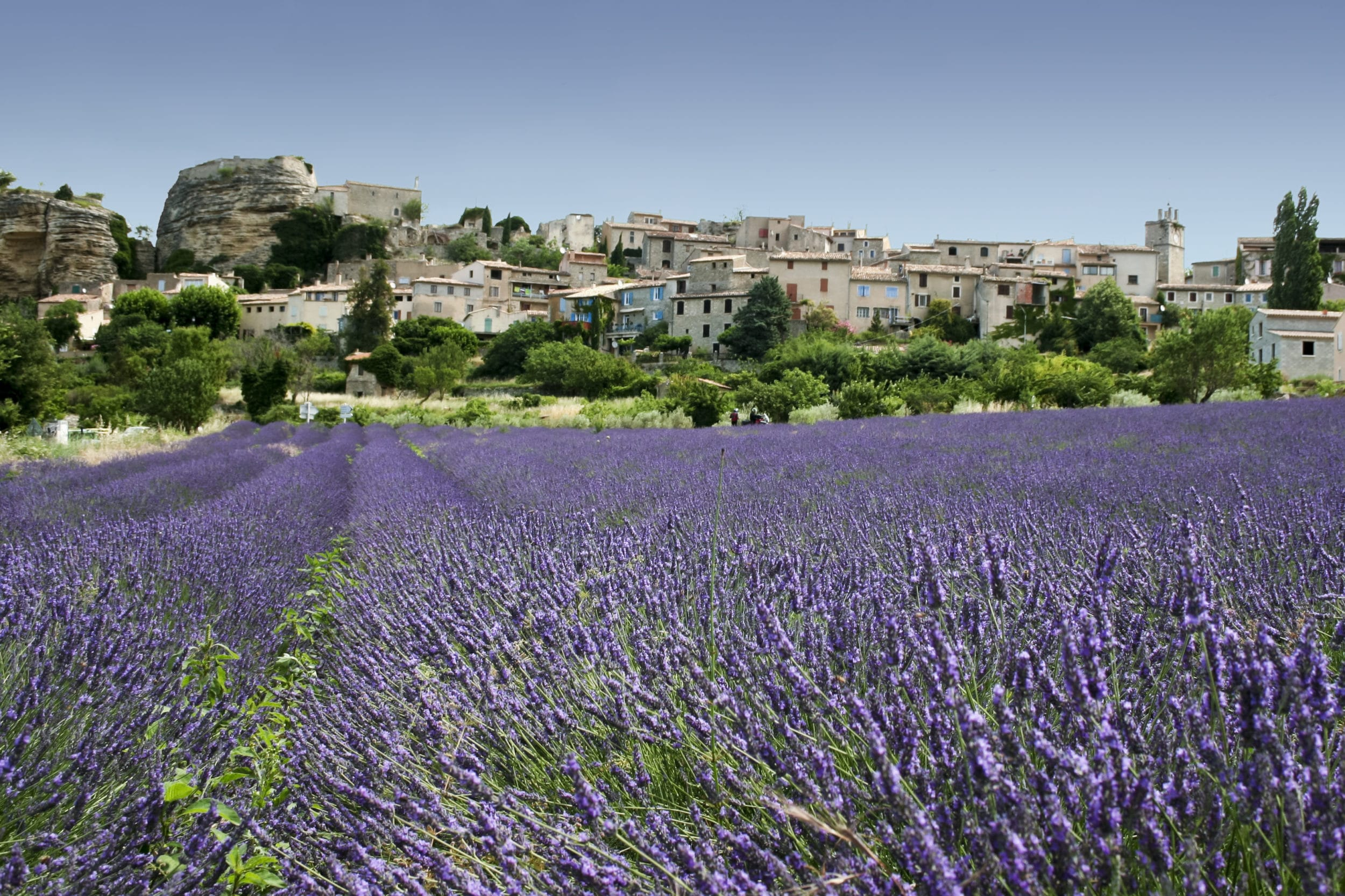 Find spring flowers in Grasse, France just outside of Nice.