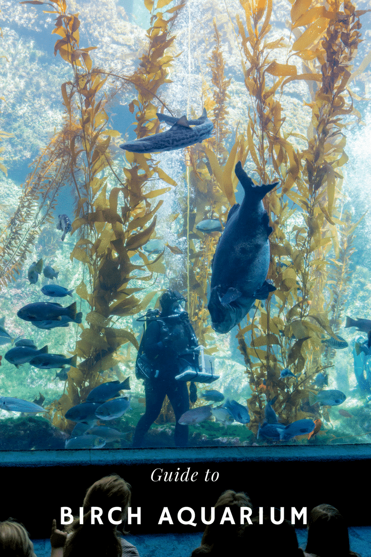What to know about visiting Birch Aquarium in San Diego