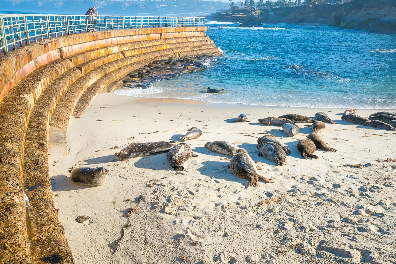 Free things to do in San Diego: La Jolla seals