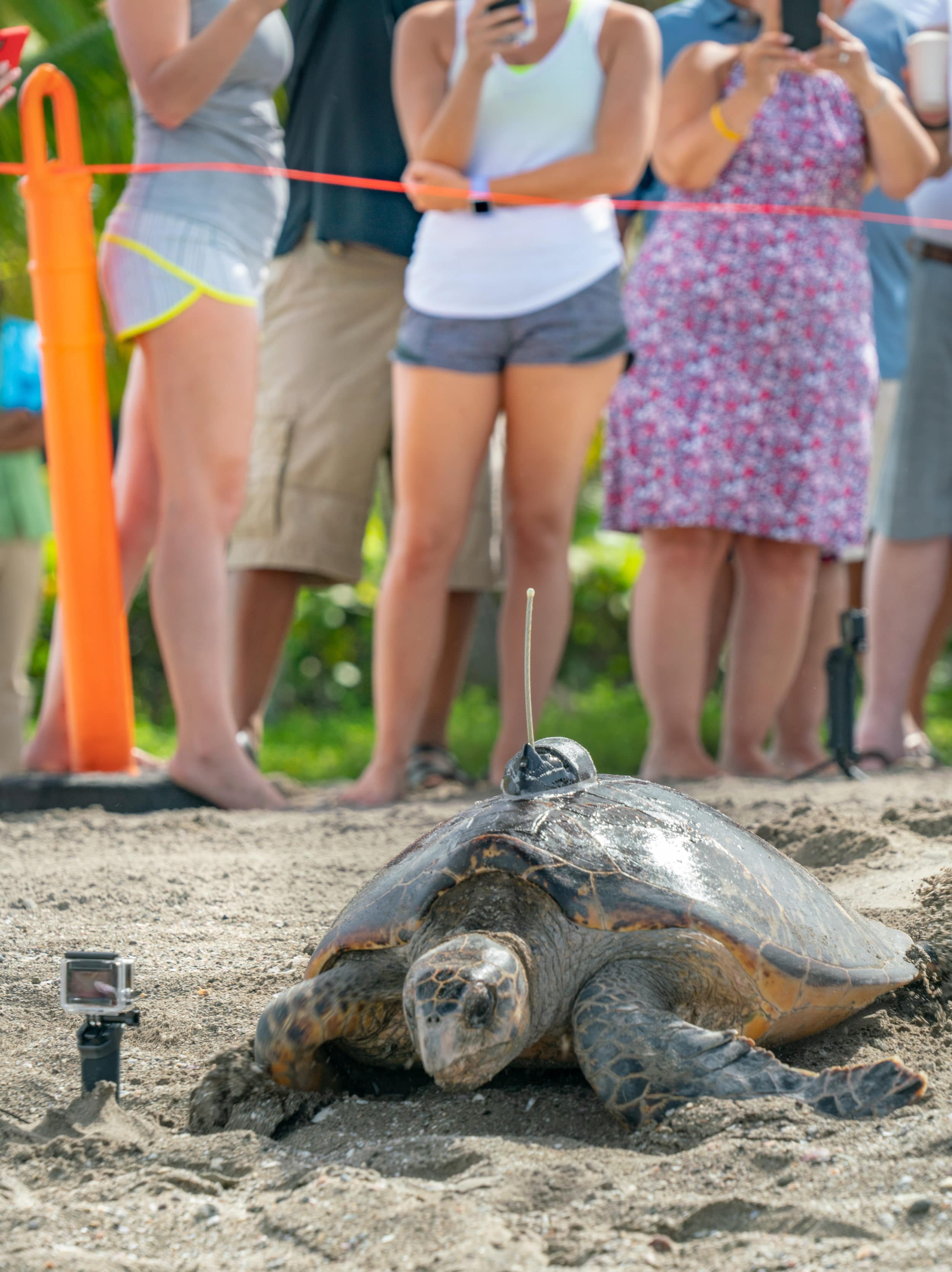 Four Seasons Nevis Sea Turtle Conservation Weekend