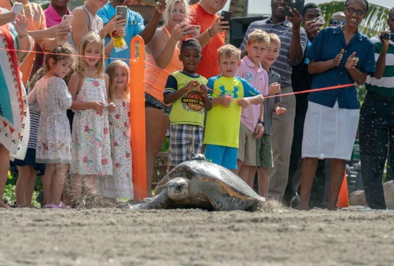 four seasons nevis sea turtle weekend