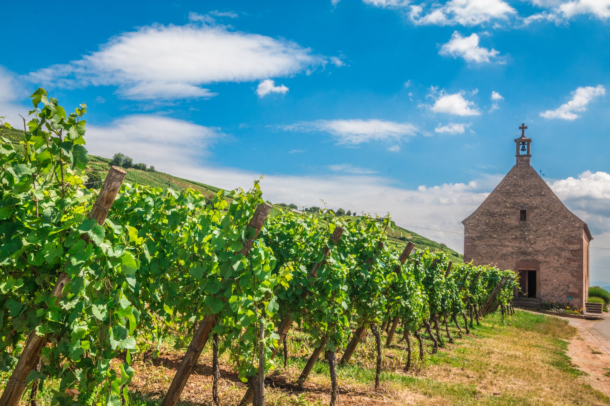 French wine regions: Alsace France Wine Route