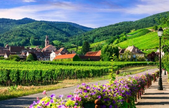 Easily Fly to These Four Famous French Wine Regions