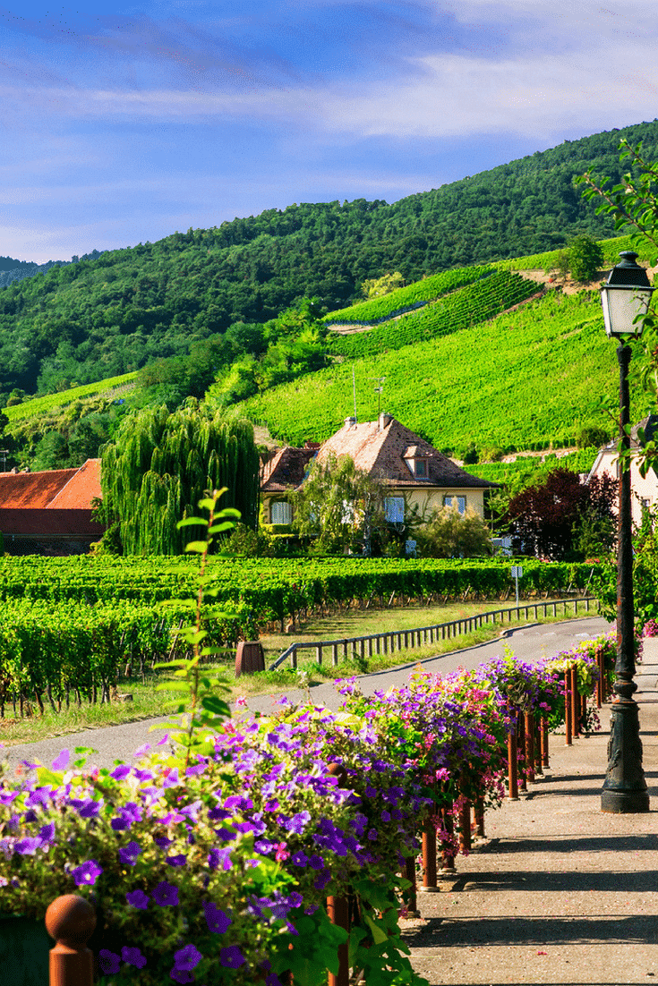 French wine regions: Explore the wine route in Alsace