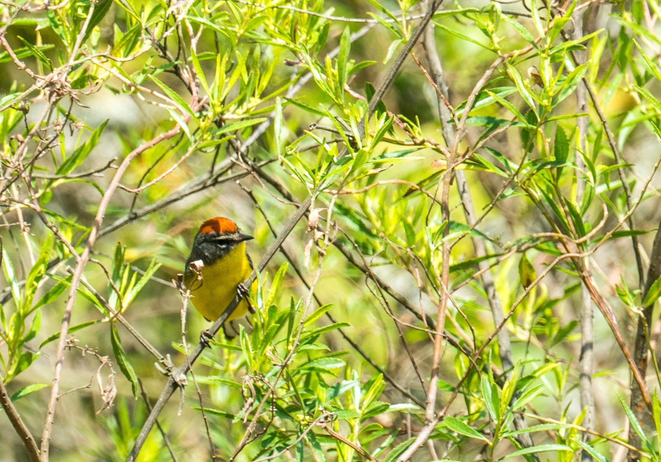 Bird watching in Salta, Argentina