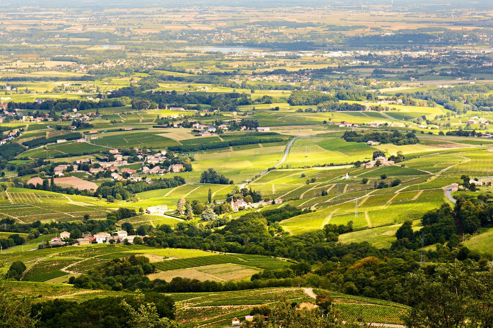 French wine regions: Vineyards Of Beaujolais, Rhone, France