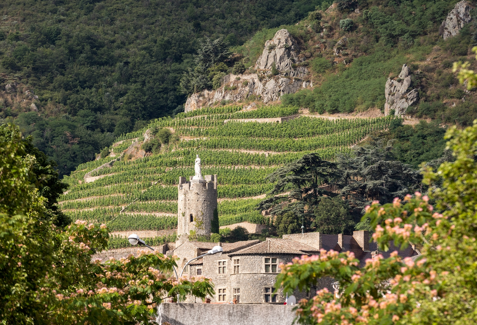 French wine regions: Go wine tasting in the Rhone Valley, France