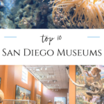 San Diego museums cater to artists, archeologists, surfers, kids, photographers, and a variety of interests. An insider's list of the most visited.