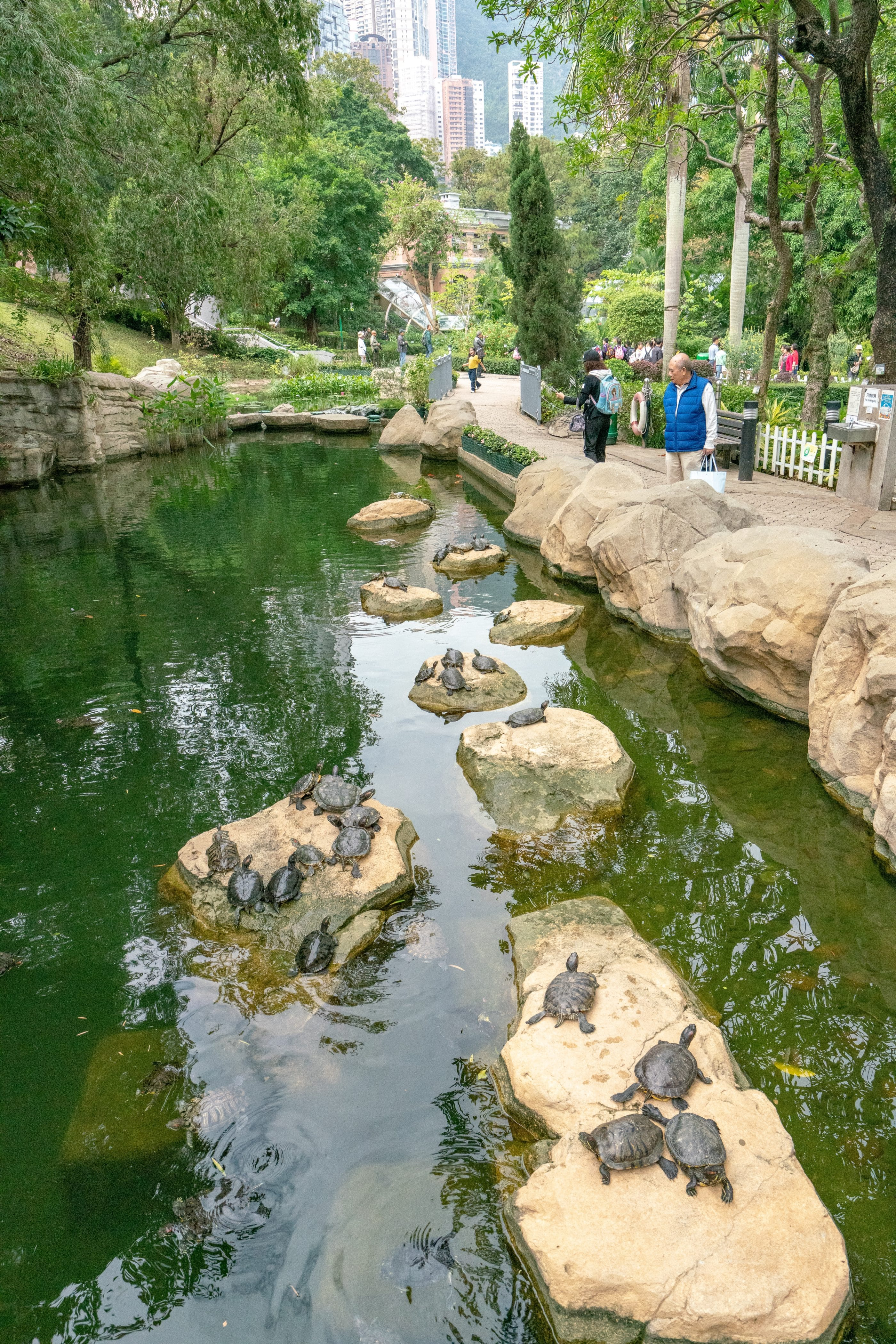 Kids love the turtles in Hong Kong Park along with the playground, waterfall, seasonal butterflies and more.