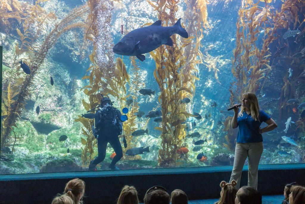 Best San Diego Museums: Birch Aquarium