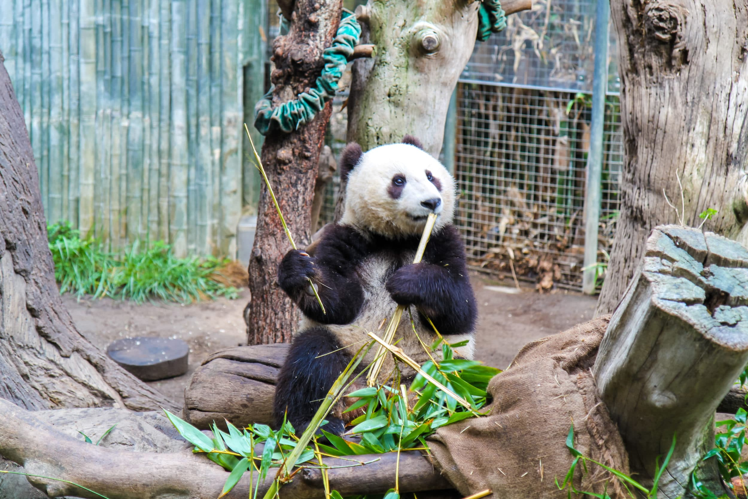 Things to do in San Diego with Kids: San Diego Zoo