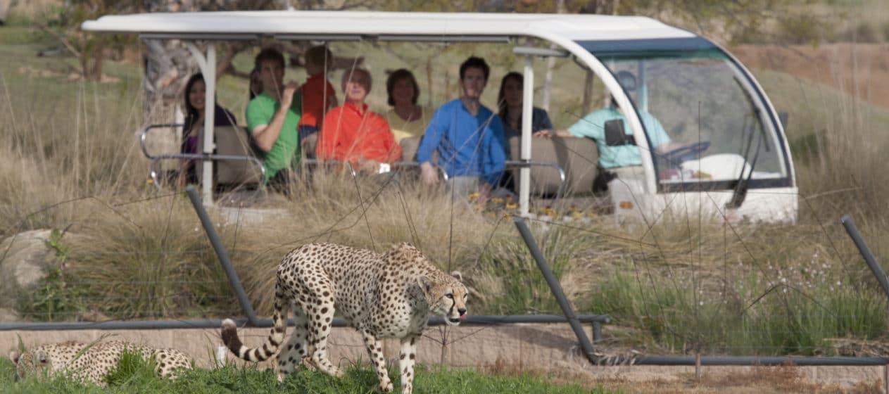 san diego zoo safari park detailed guide la jolla mom