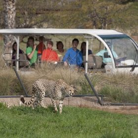 Detailed Guide to San Diego Zoo Safari Park