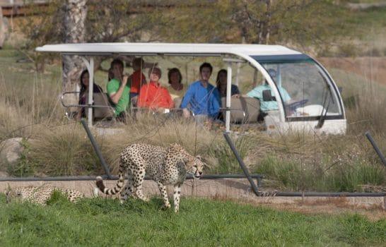 Detailed Guide to San Diego Zoo Safari Park