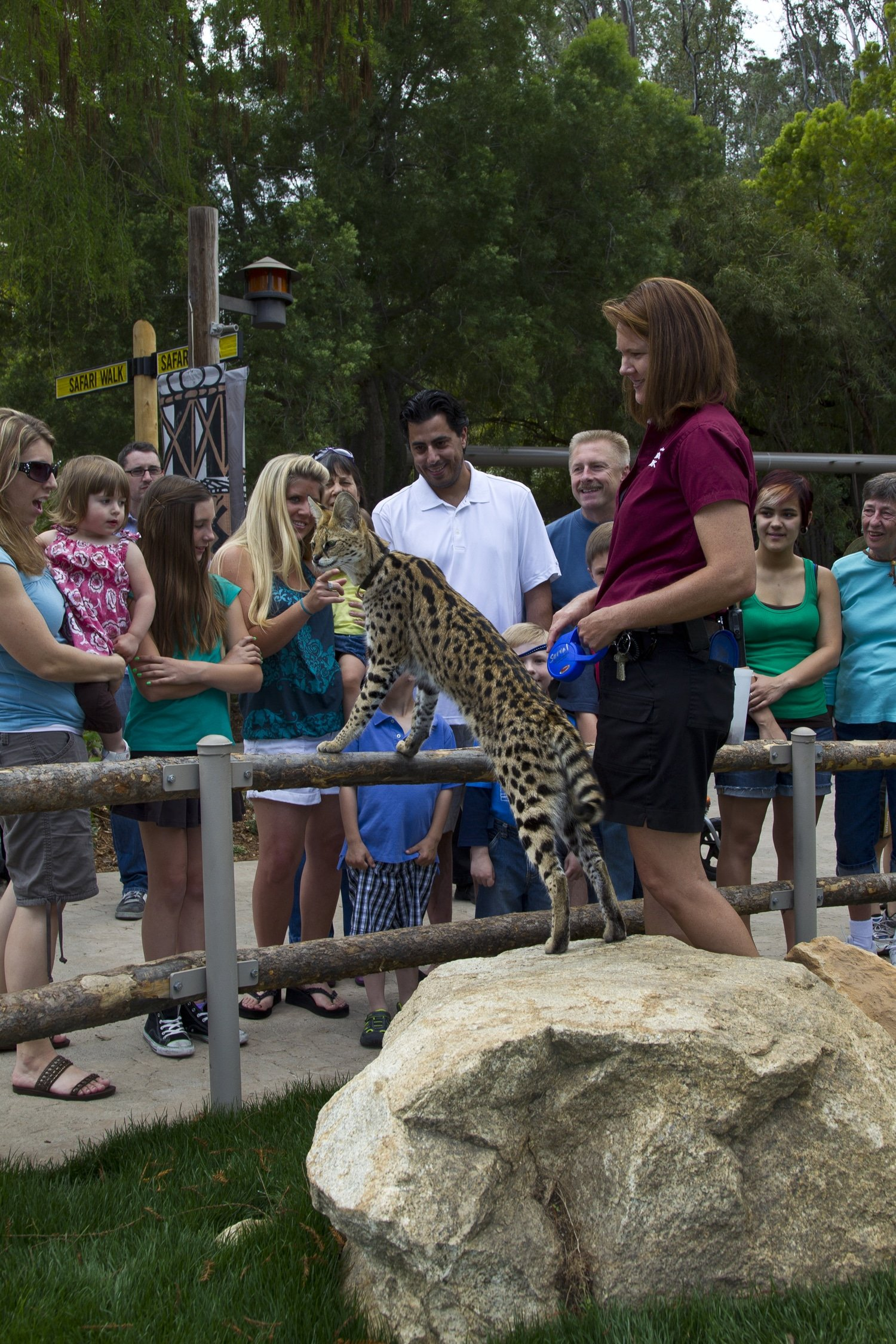 Animal Ambassadors at San Diego Zoo Safari Park