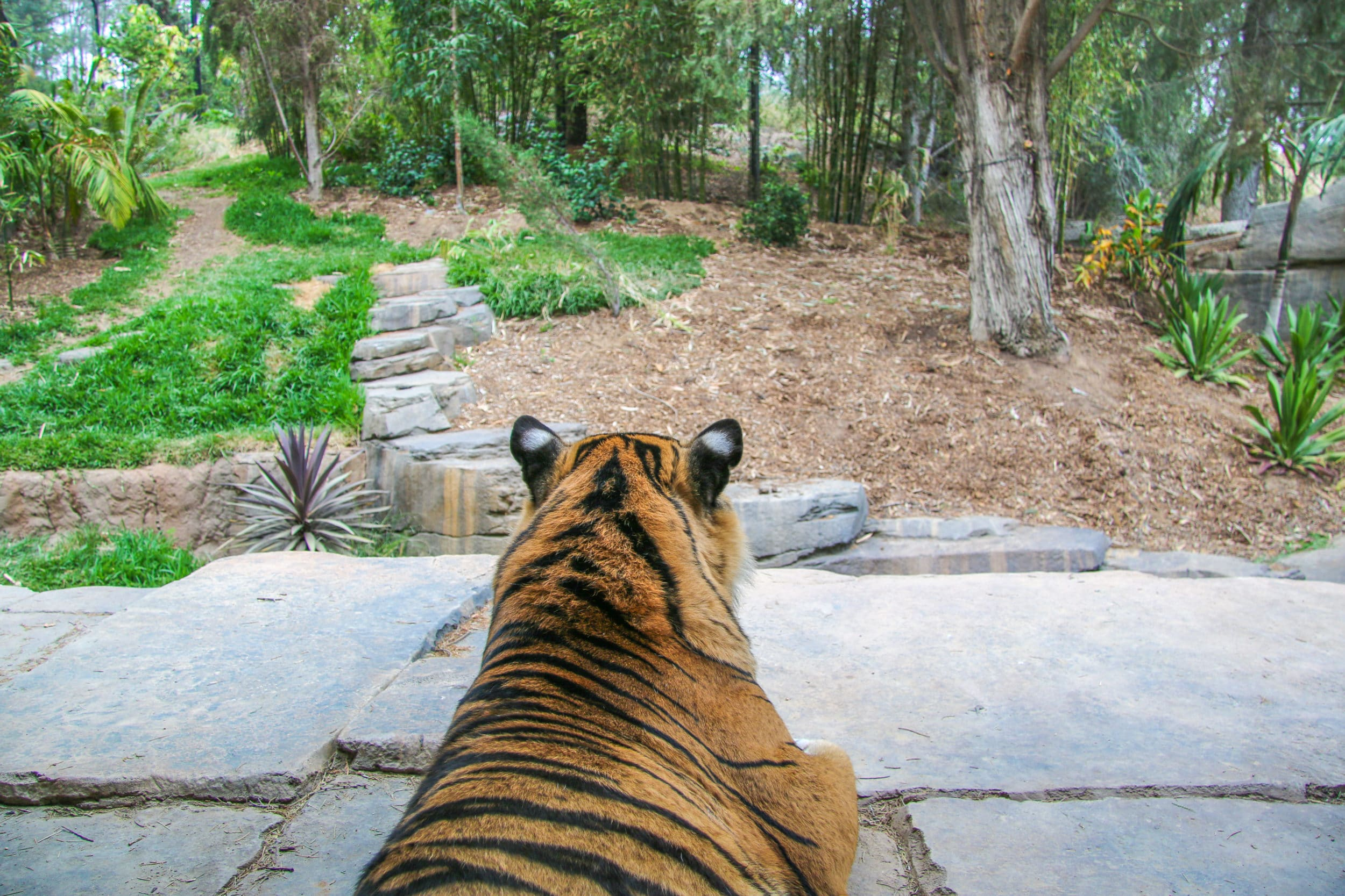 San Diego Zoo Safari Park exhibits include Tiger Trail