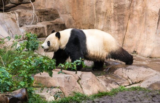 SALE on San Diego Zoo Tickets & More – Black Friday/Cyber Monday