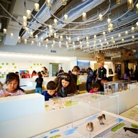 What to Do in Los Angeles with Young Kids