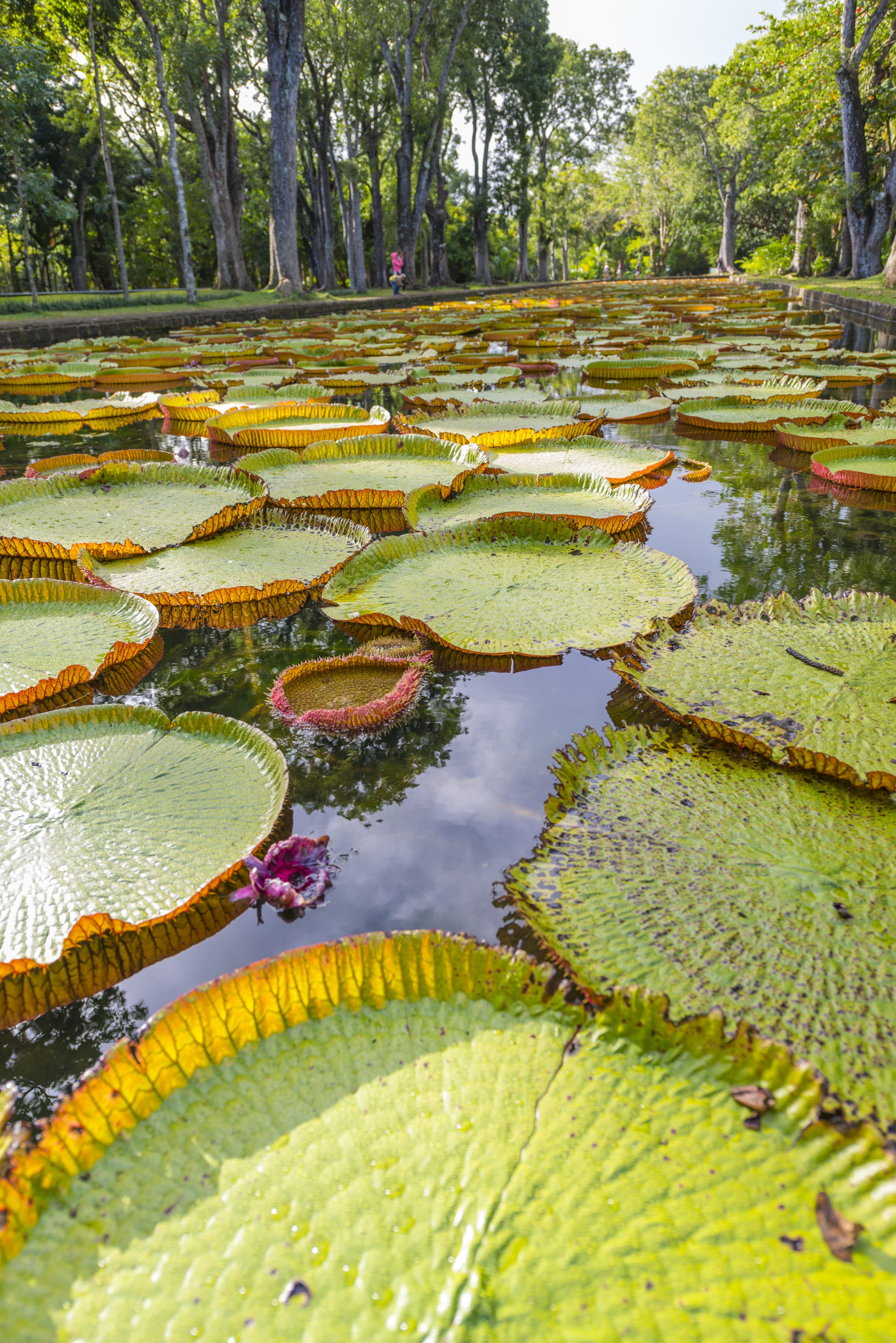 Things to do in Mauritius: Botanical Gardens