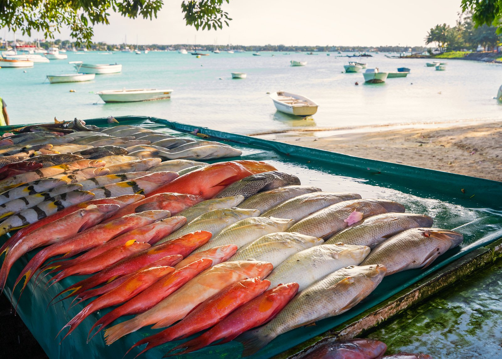 Where to eat in Mauritius