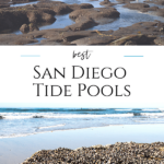 The ultimate guide to San Diego tide pools with best beaches, what to know before you go, animals to see, & FAQs answered by a frequent visitor.