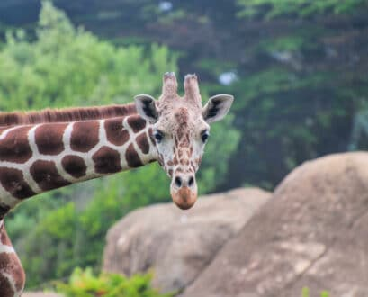 How to Buy Discount San Francisco Zoo Tickets