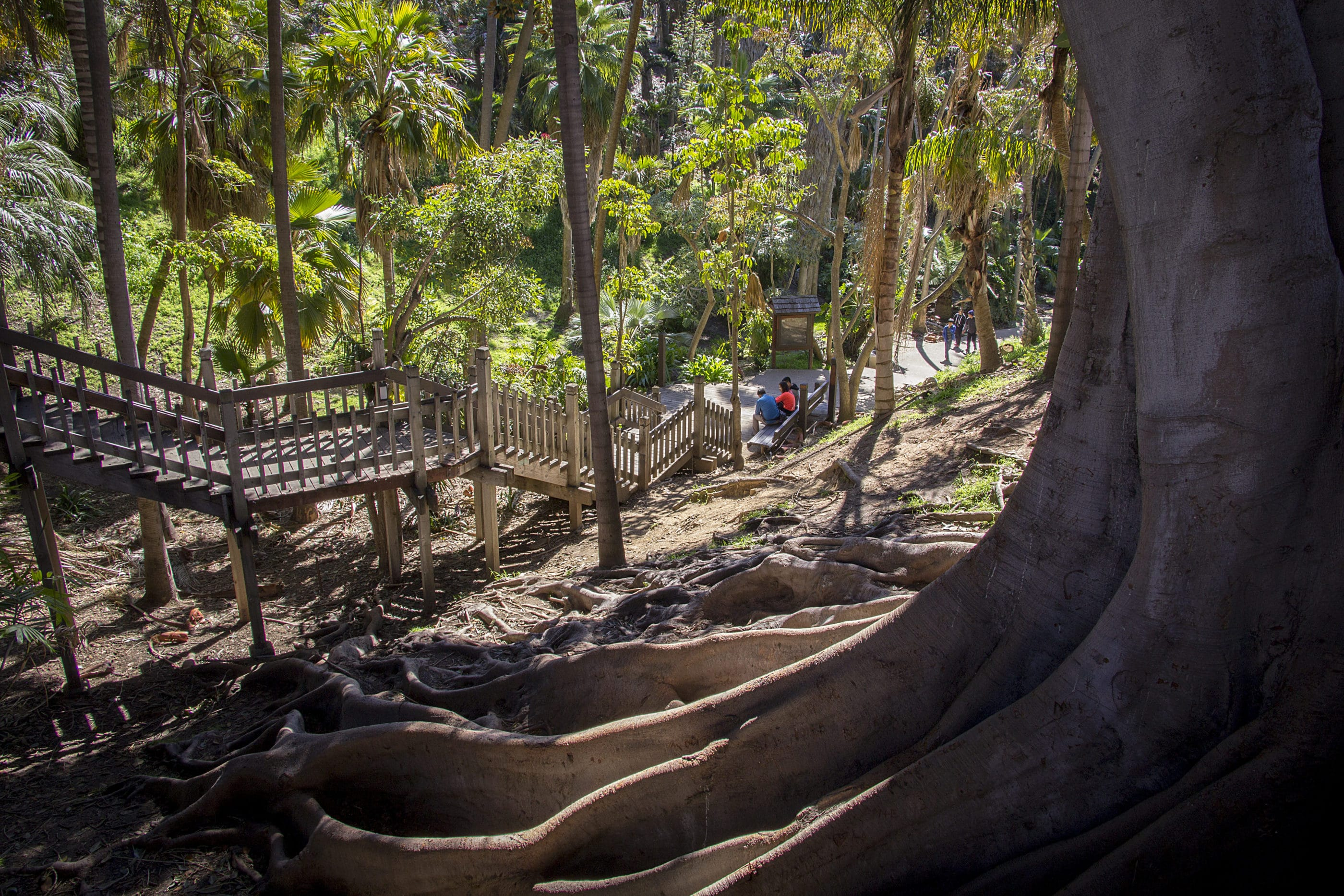 Things to do in Balboa Park: Hike Palm Canyon