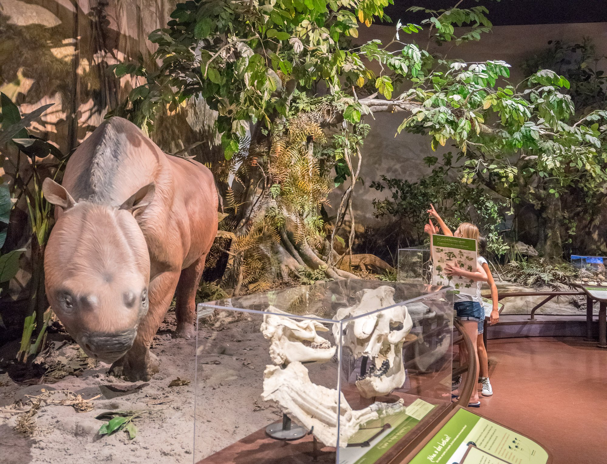 Things to do in Balboa Park: San Diego Natural History Museum