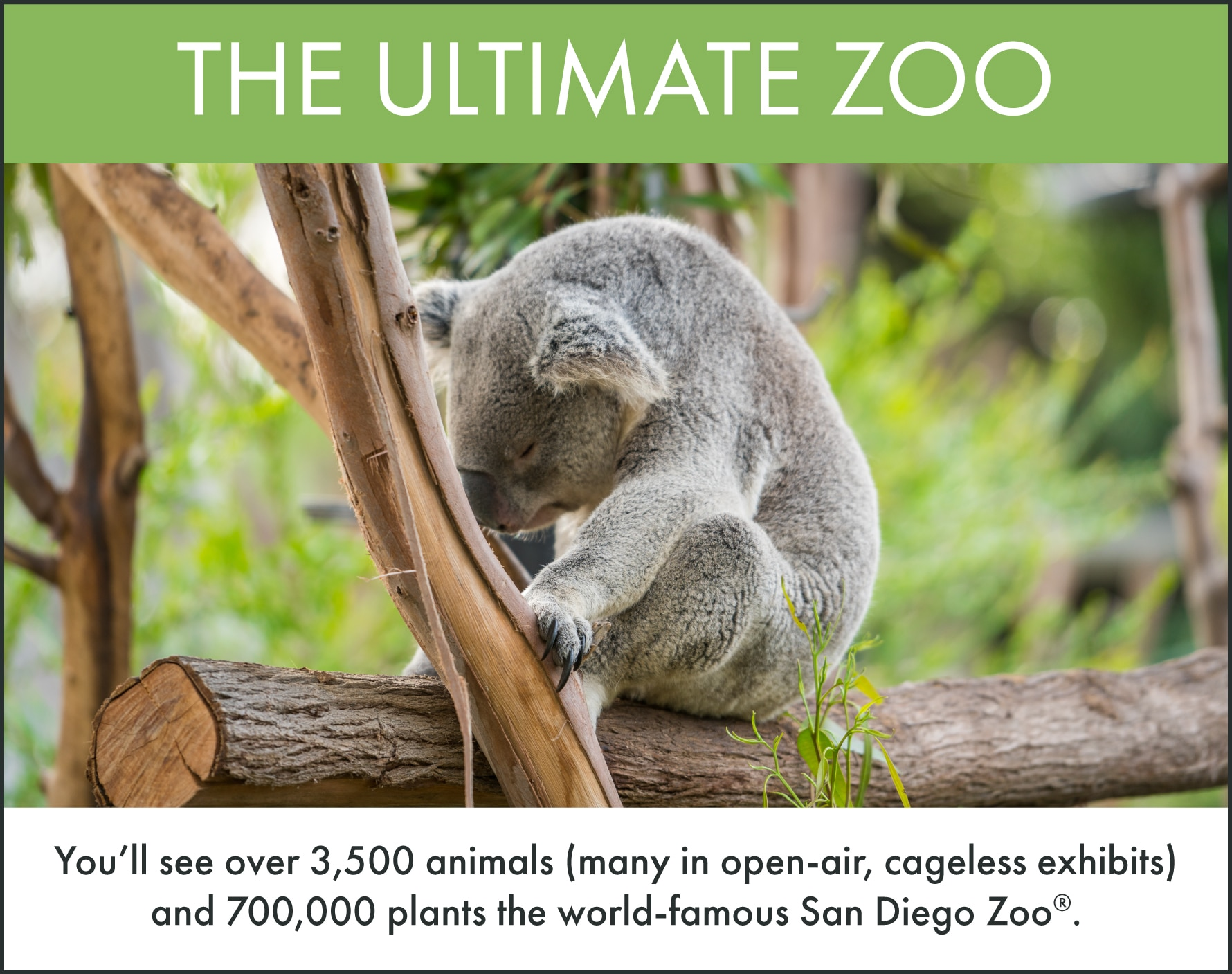 Top things to do in San Diego: San Diego Zoo