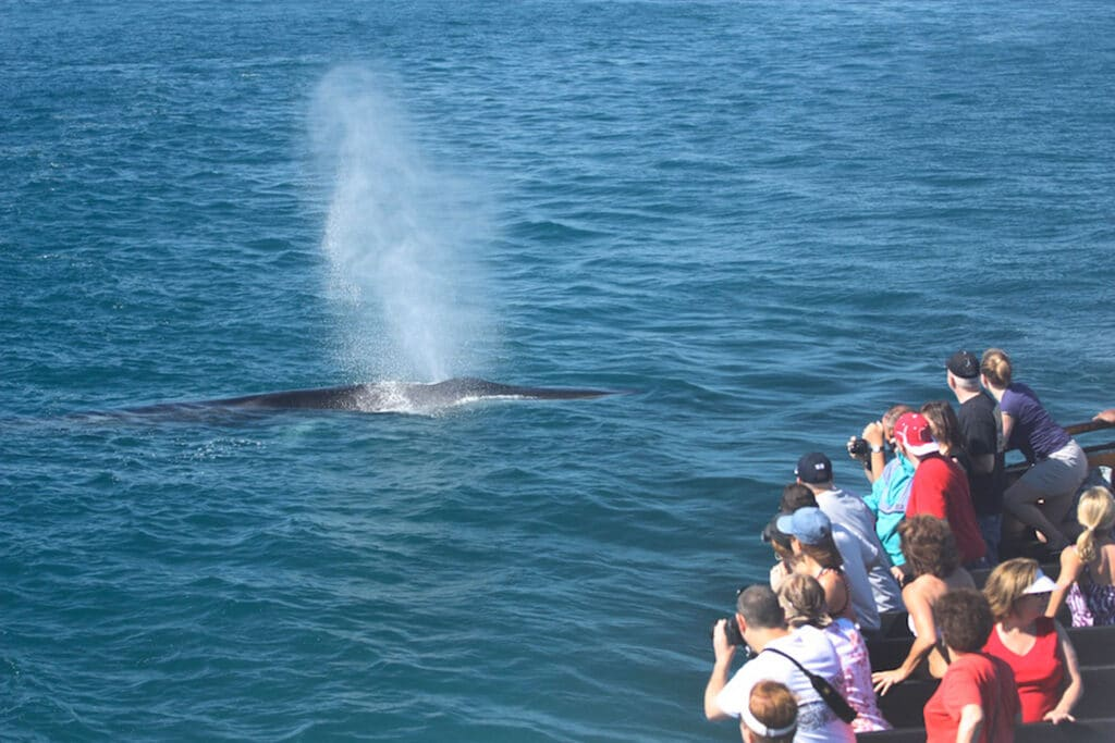 Best San Diego Tours: Whale Watching with Flagship Cruises and Birch Aquarium