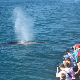 Wow Your Kids with Easy Pacific Gray Whale Migration Trivia