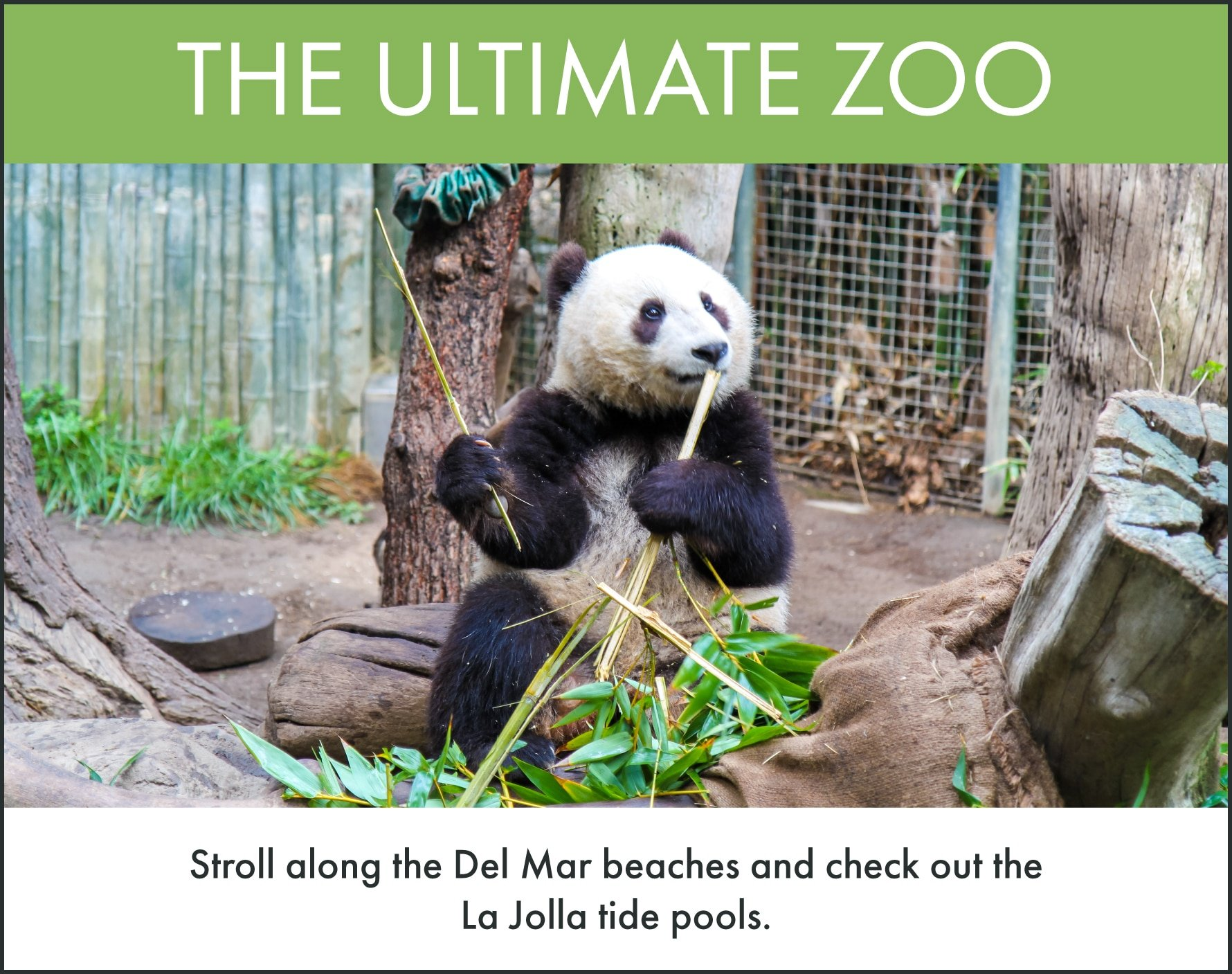 Things to do in San Diego: Visit the San Diego Zoo