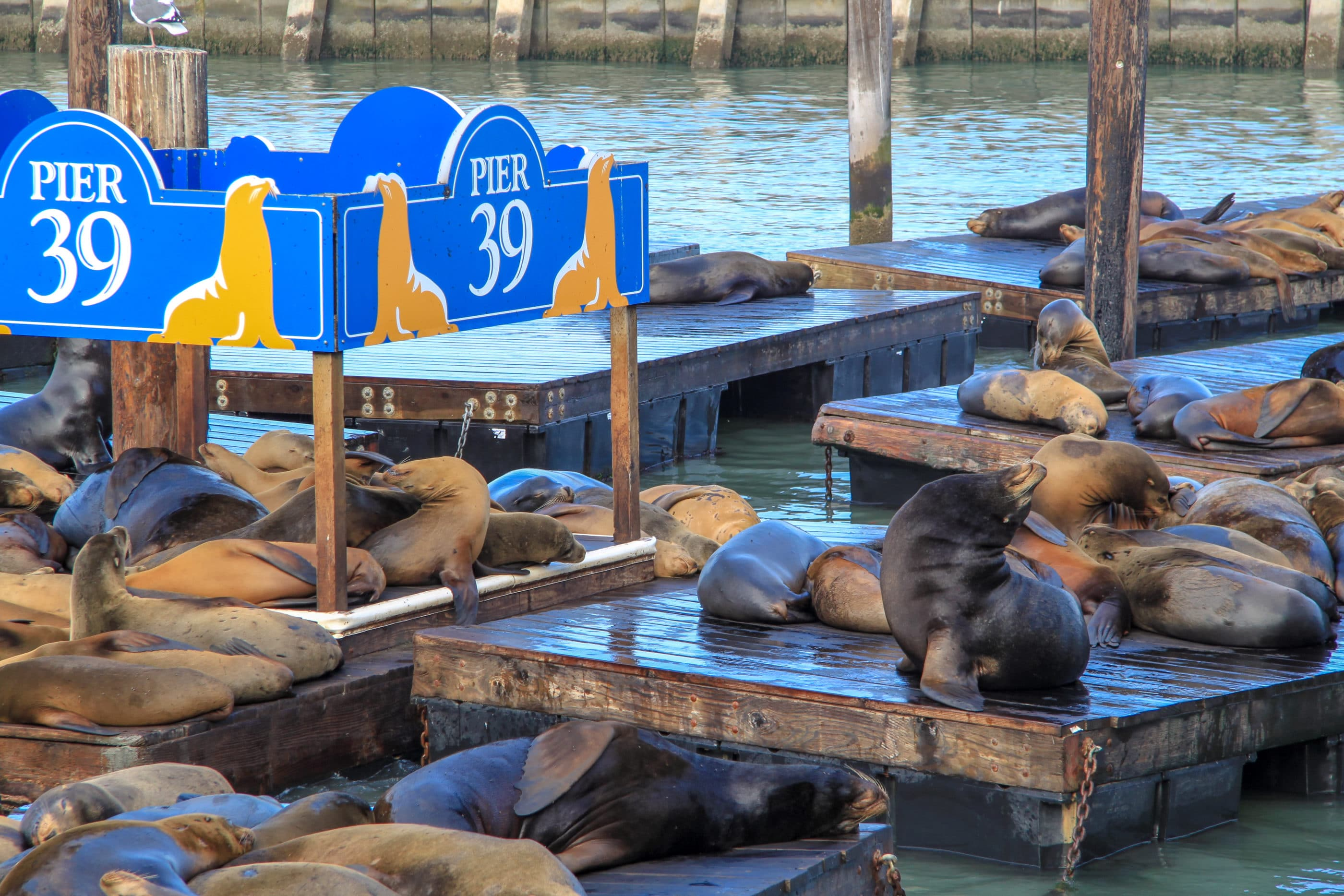 Things to Do in San Francisco: Pier 39