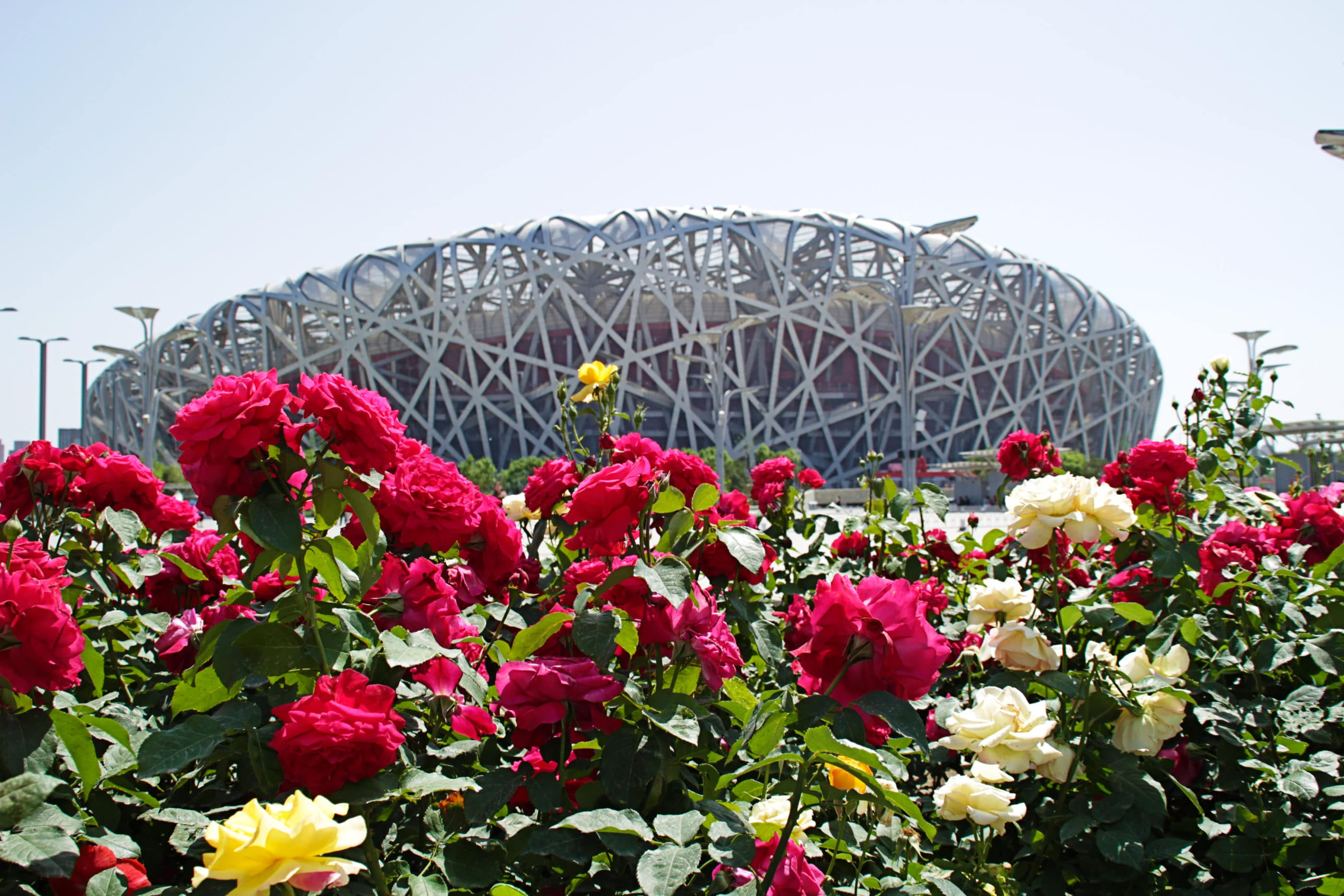 Beijing Olympic Park Bird's Nest