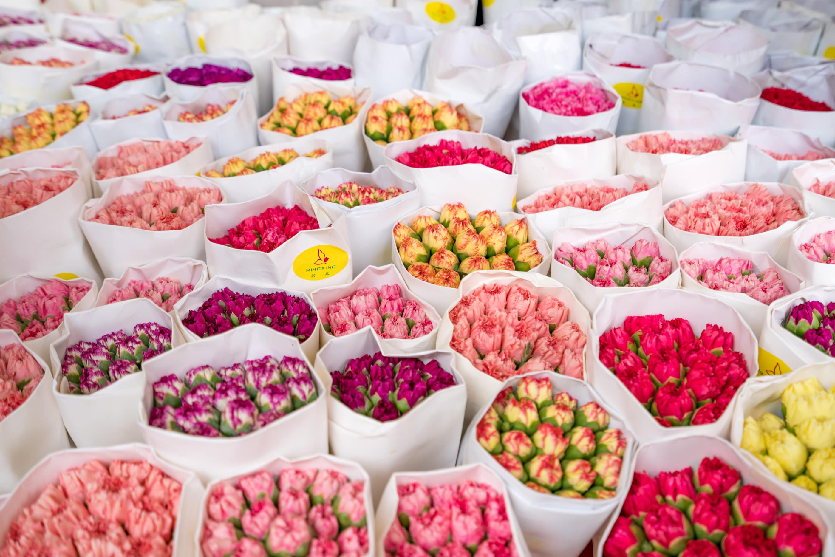 Hong Kong shopping: Flower Market in Mongkok
