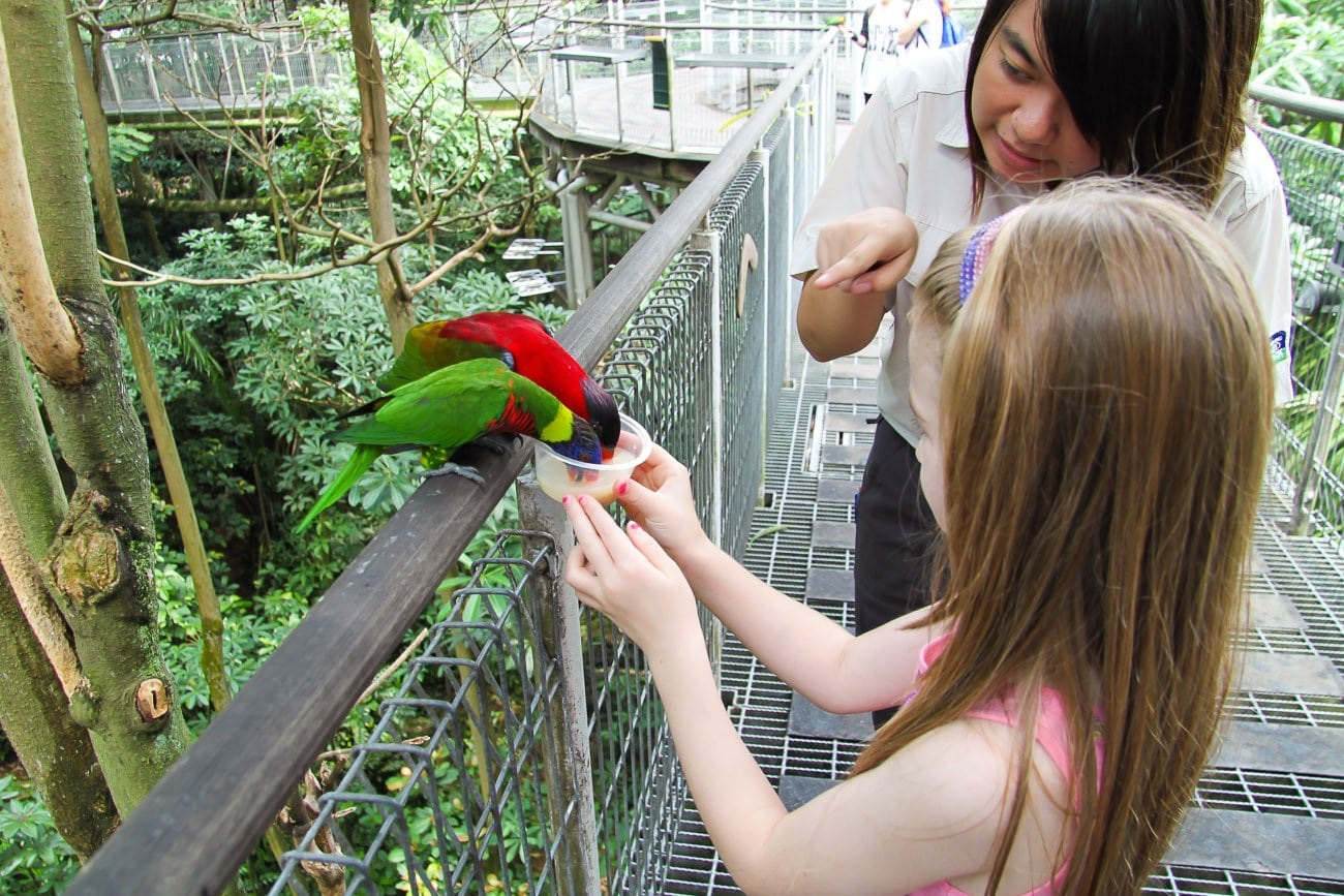 Things to do in Singapore: Jurong Bird Park