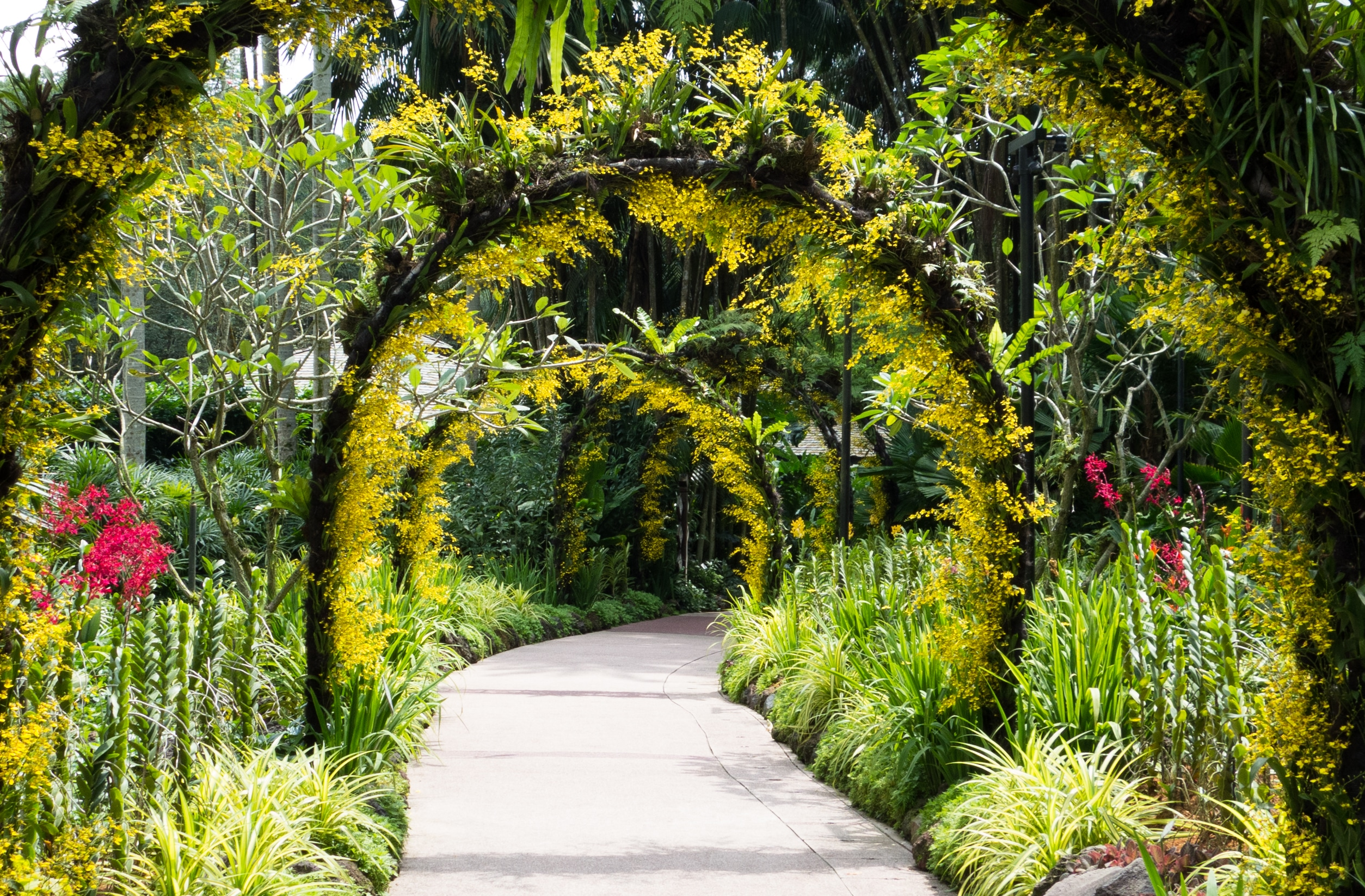 Orchid arches at the Singapore Botanic Garden