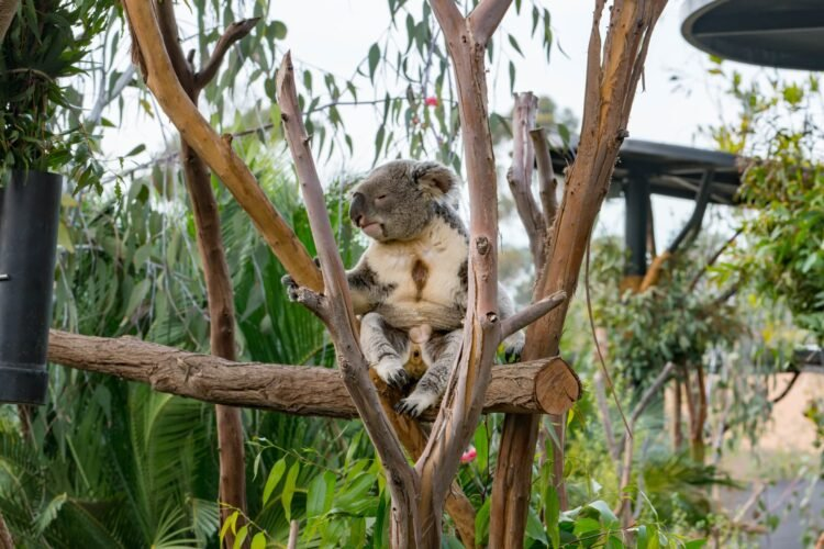10 Tips for Visiting the San Diego Zoo