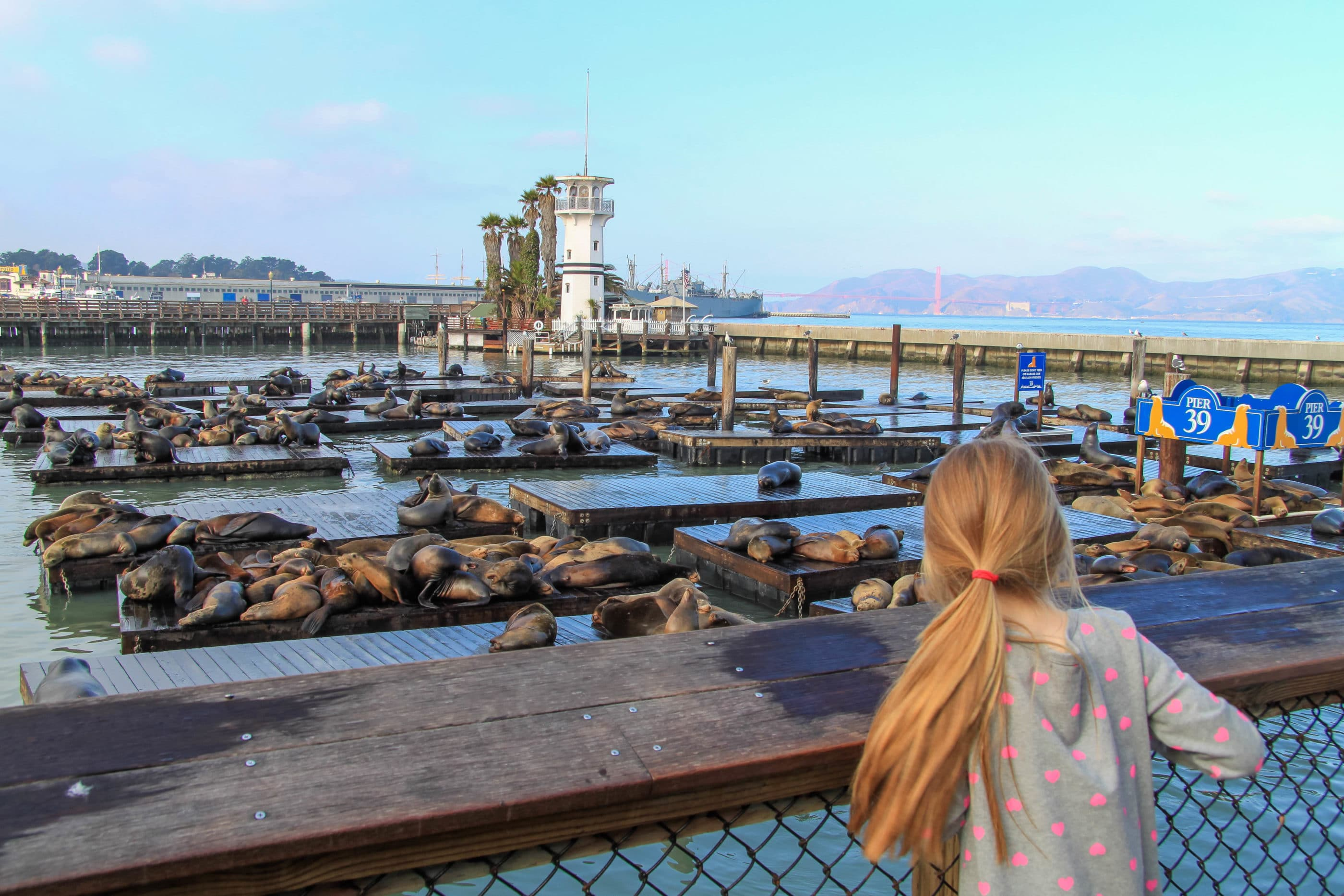 My daughter admiring the lounging Pier 39 sea lions