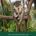 Tips or visiting the San Diego Zoo written by a local.