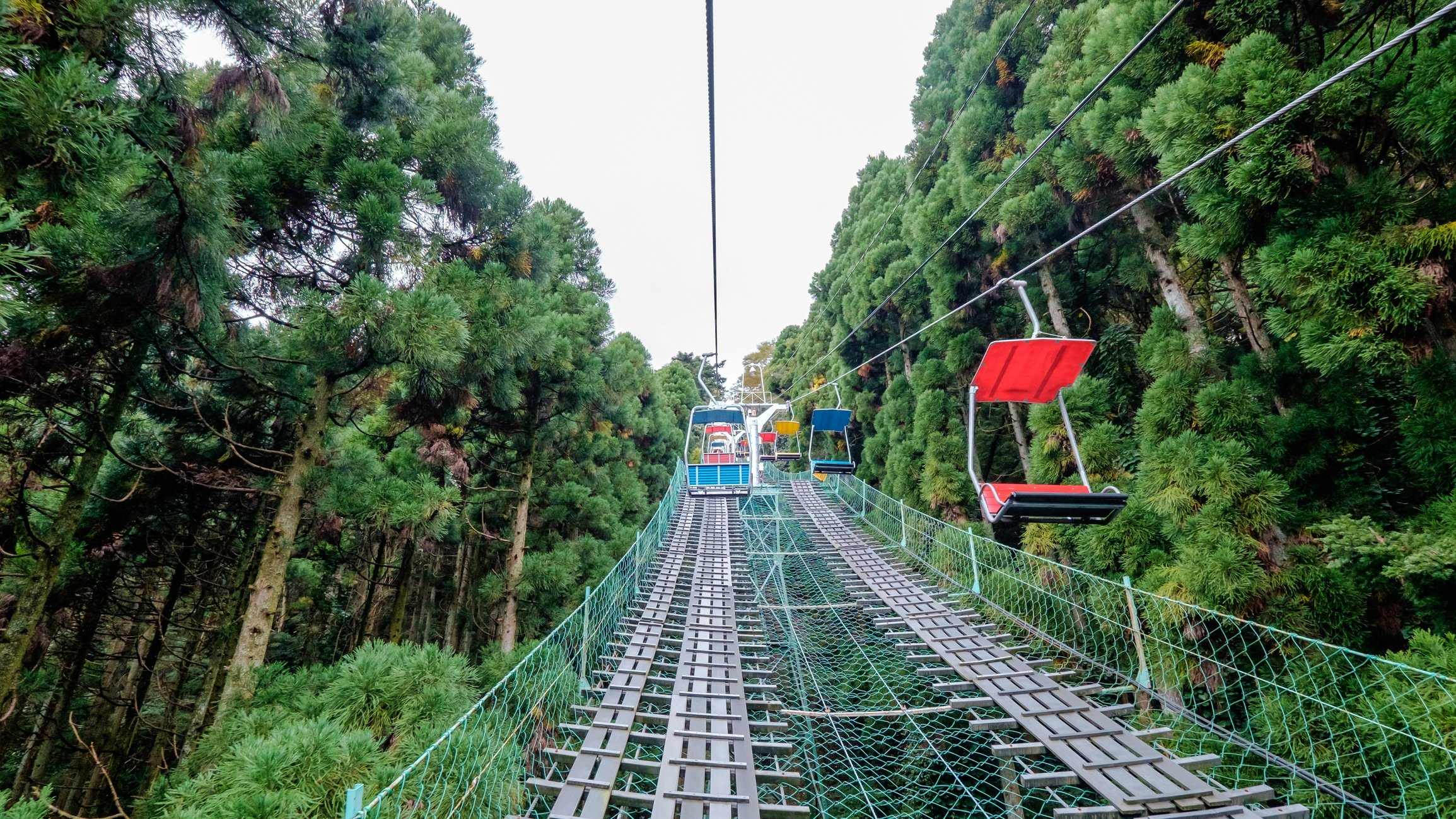 Going on a chair lift up towards Mount. Takao, Tokyo flanked by tall green pine trees.