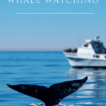 My guide to whale watching in San Diego includes what you'll see, the best tours to book, what to bring, when to go, and more fun tips.
