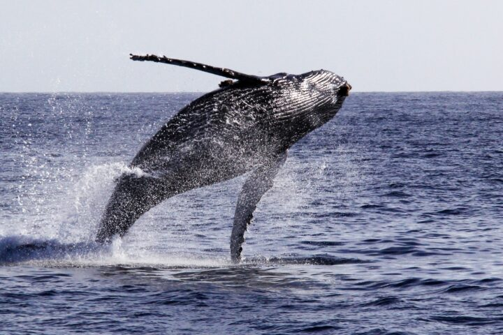 Whale Watching Tours in San Diego